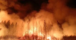 De Terribles Incendies ravagent la Californie, déjà 17 morts et des centaines de blessés
